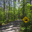 Downhill bike sign on trail in Itasca State Park, Northern Minnesota, USA — Stock Photo #31643437