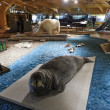 Svalbard Museum, Longyearbyena, Svalbard, Norway — Stock Photo