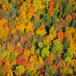 Aerial view of fall foliage in Vermont. — Stock Photo