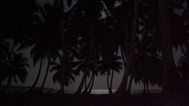 Tropical Night, Palm Trees, Ocean — Stock Video