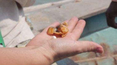 Extraction de perles naturelles — Vidéo