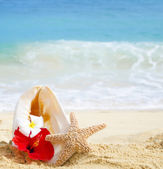 Seashell and starfish with tropical flowers on sandy beach — Stock Photo