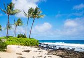 Palm trees on the sandy beach in Hawaii — Stock Photo
