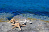 Three starfishes next to sea — Stock Photo