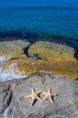 Two starfishes next to sea — Stock Photo