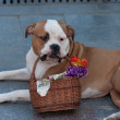 Dog raises money - Stockfoto