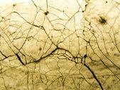 Texture de fond grungy mur — Photo