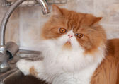 Red cat with water droplets on a muzzle — Stock Photo