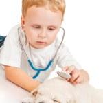 chłopiec słucha szczeniak retriever przez stetoskop — Zdjęcie stockowe