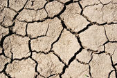 """""""The texture cracked ,dry the surface of the earth"""" — Stock Photo"""