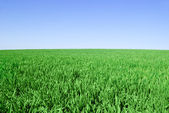 """ Green field on the background of the blue sky"" — Stok fotoğraf"