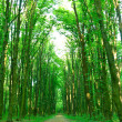 Green trees Sunny day in the forest. — Stock Photo
