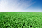 """"""" Green field on the background of the blue sky."""" — Stock Photo"""
