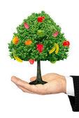 白い背景で隔離の手のひらに果物の木 — ストック写真