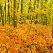 Red oak leaves on the trees in the autumn forest — Stock Photo