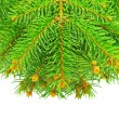 Branches of the Christmas tree, isolated on white background — Stockfoto