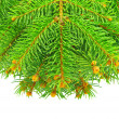 Branches of the Christmas tree, isolated on white background — Stok fotoğraf