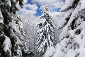 Winter trees covered with snow in the forest — Foto Stock