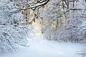 Snow-covered road in winter forest — Stockfoto