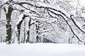 Winter trees covered with snow in the forest — Stock Photo