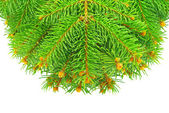 Branches of the Christmas tree, isolated on white background — Stock Photo