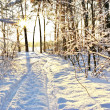 Sunlight among the branches of trees in snowy  winter forest. — Stock Photo