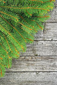 Green branches of spruce on the wooden background. — Stockfoto