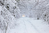 Snow-covered road in winter forest. — Stock fotografie