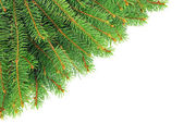 Christmas, spruce branches isolated on white background. — Stockfoto