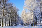 Äste, die im Winter mit Raureif überzogen. — Stockfoto