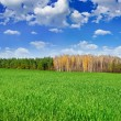 Green field near the forest on background of blue sky — Stock Photo #46046787