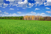 Green field near the forest on  background of blue sky — Stock Photo