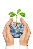 Hands holding planet earth with plants isolated on white background — Stock Photo
