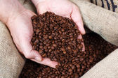Removing Roasted Coffee Beans — Stock Photo
