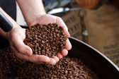 Hand removing roasted coffee beans — Stock Photo