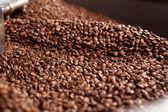Coffee seed — Stock Photo