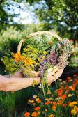 Fresh organic herbs — Stock Photo