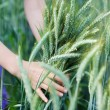 Girl in a field of green wheat — Stock Photo