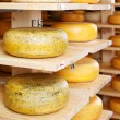 Cheese rounds in factory warehouse — Stock Photo