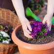 Stock Photo: Flower pot