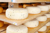 Young Cheese Ripening — Stock Photo