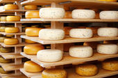 Cheese wheels in factory — Stock Photo