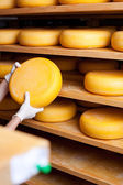 Cheese maker selects a cheese — Stock Photo
