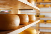 Many cheese-wheels maturing on shelves — Stock Photo