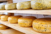 Many matured cheeses on shelves — Stock Photo