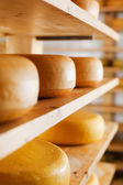 Cheese-wheels maturing on shelves — Stock Photo