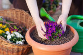 Flower pot — Stock Photo