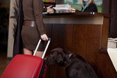 Female guest with dog at hotel reception — Stock Photo