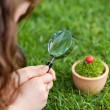 Girl Looking At Ladybird On Potted Plant In Park — Stock Photo