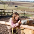 Stock Photo: Young girl feeding carrots to horse